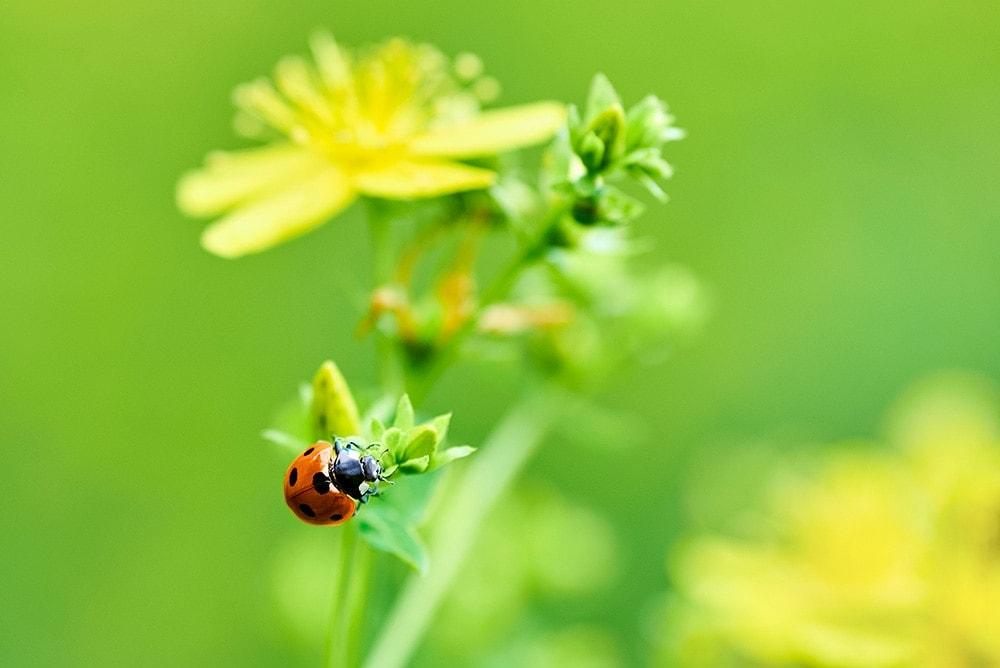 Procházka přírodou nám udělá radost