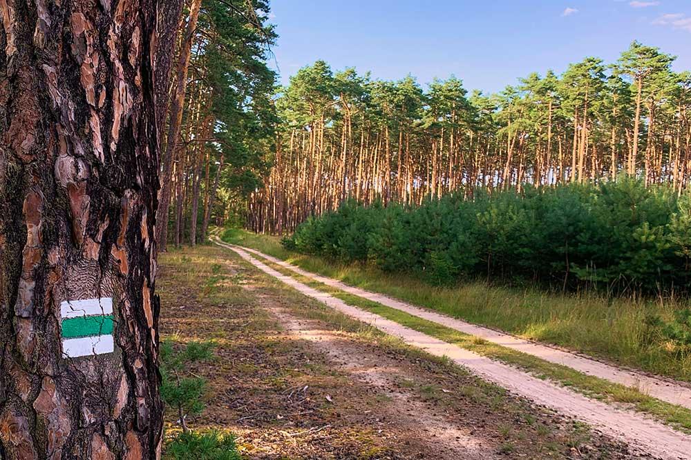 Lesní cesta jako připomínka cesty do sebe sama