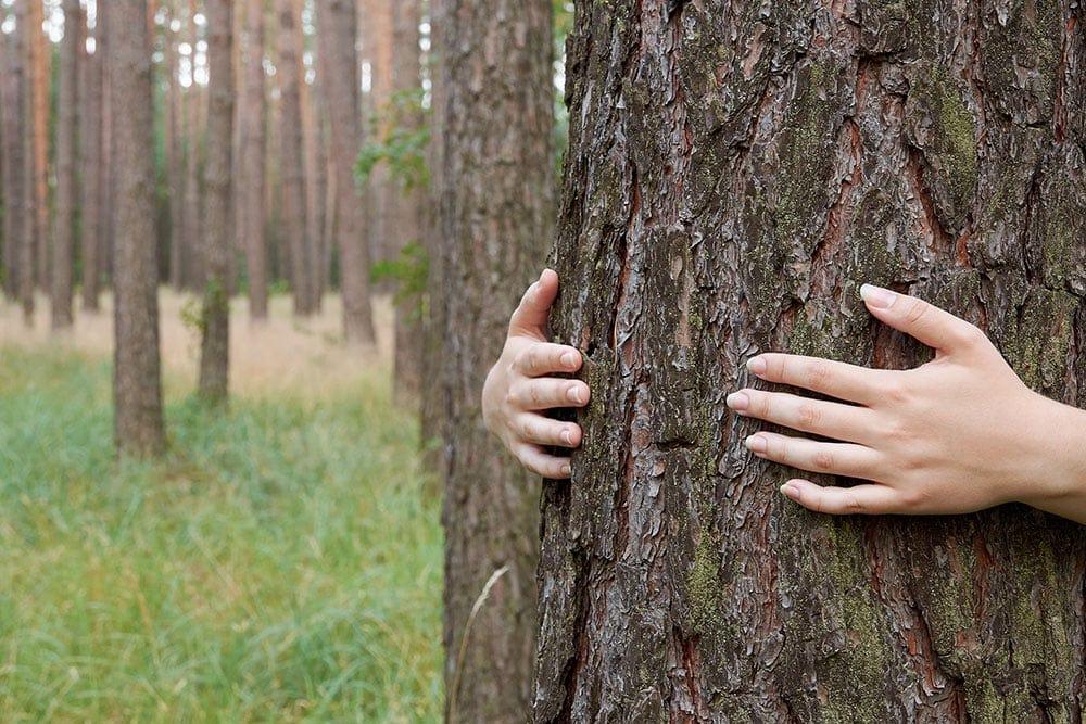 Ženské ruce objímají kmen stromu v lese